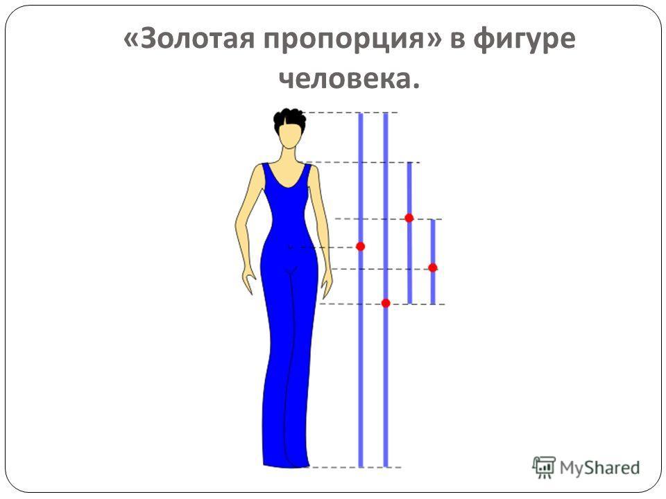 « Золотая пропорция » в фигуре человека.