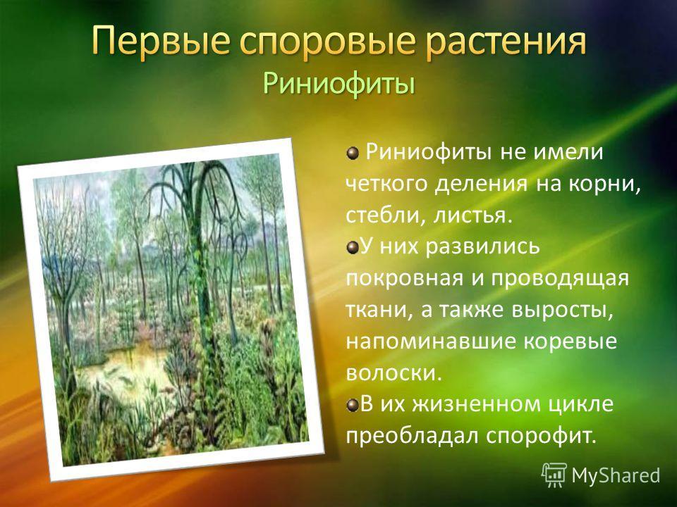 Риниофиты не имели четкого деления на корни, стебли, листья. У них развились покровная и проводящая ткани, а также выросты, напоминавшие коревые волоски. В их жизненном цикле преобладал спорофит.