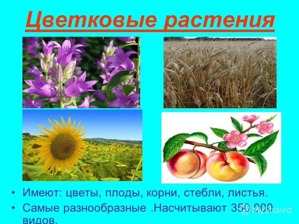Цветковые растения Имеют: цветы, плоды, корни, стебли, листья. Самые разнообразные.Насчитывают 350 000 видов.