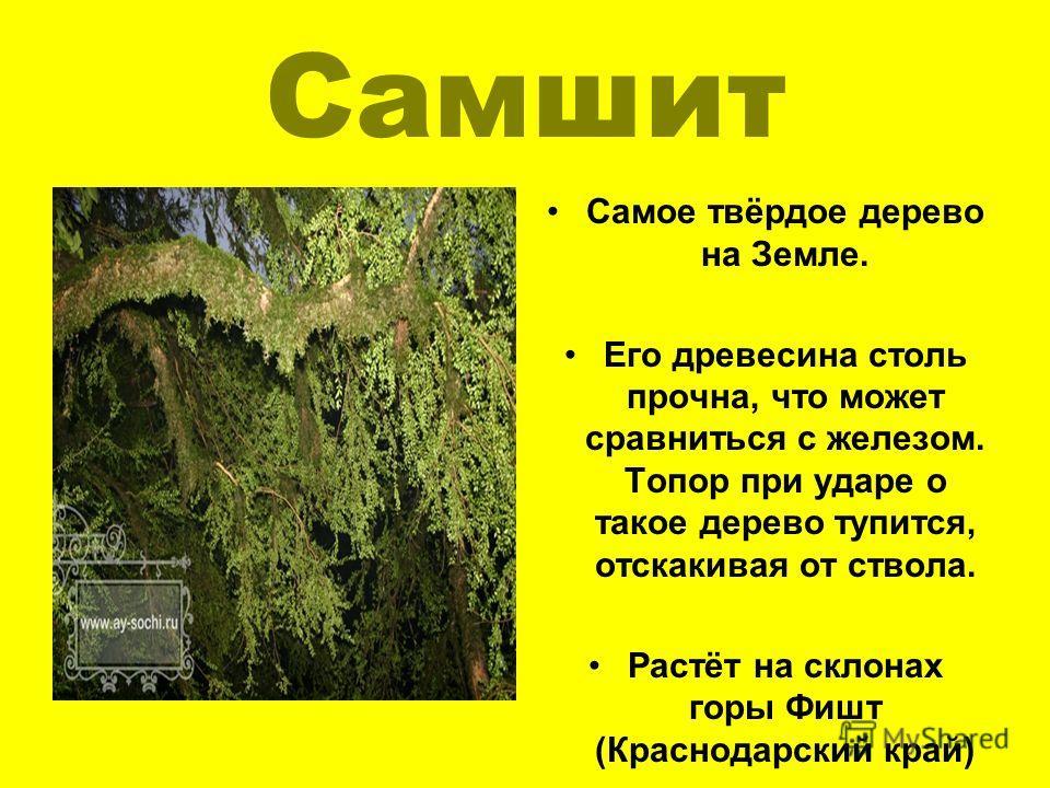 Самшит Самое твёрдое дерево на Земле. Его древесина столь прочна, что может сравниться с железом. Топор при ударе о такое дерево тупится, отскакивая от ствола. Растёт на склонах горы Фишт (Краснодарский край)