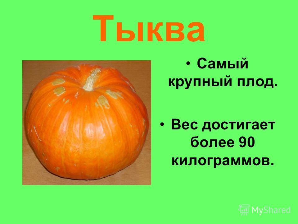 Тыква Самый крупный плод. Вес достигает более 90 килограммов.