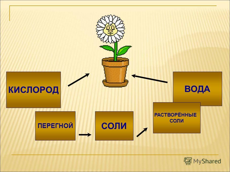 Урок окружающего мира 3 класс тема