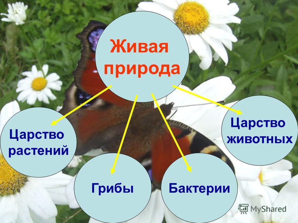 Живая природа Царство растений Царство животных БактерииГрибы