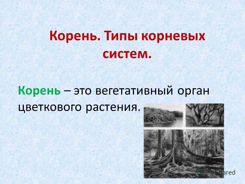 Корень. Типы корневых систем. Корень – это вегетативный орган цветкового растения.