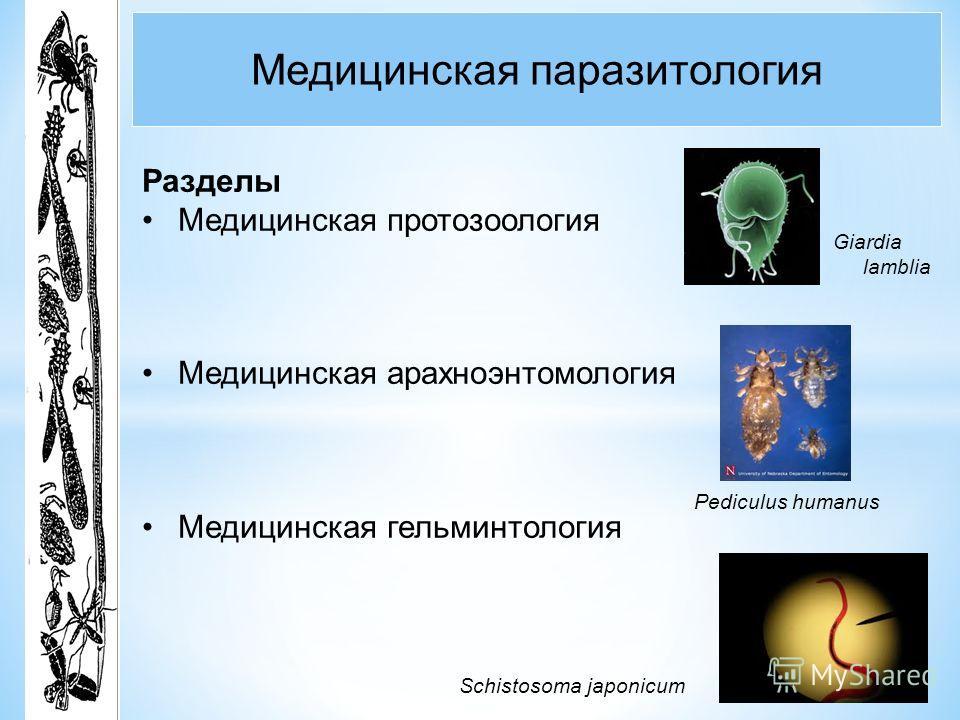 значение паразитов в природе и жизни человека