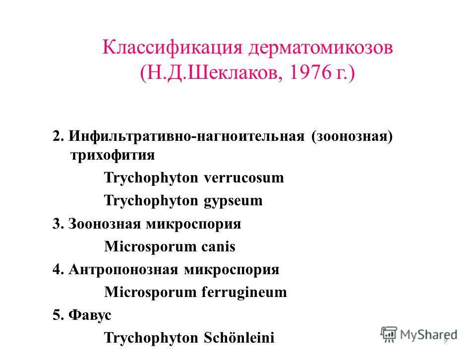Классификация дерматомикозов (Н.Д.Шеклаков, 1976 г.) 2. Инфильтративно-нагноительная (зоонозная) трихофития Trychophyton verrucosum Trychophyton gypseum 3. Зоонозная микроспория Microsporum canis 4. Антропонозная микроспория Microsporum ferrugineum 5