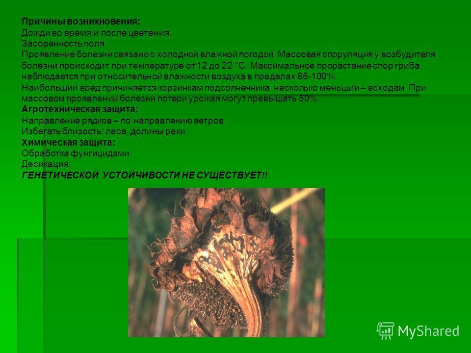 Причины возникновения: Дожди во время и после цветения. Засоренность поля. Проявление болезни связано с холодной влажной погодой. Массовая споруляция у возбудителя болезни происходит при температуре от 12 до 22 °C. Максимальное прорастание спор гриба