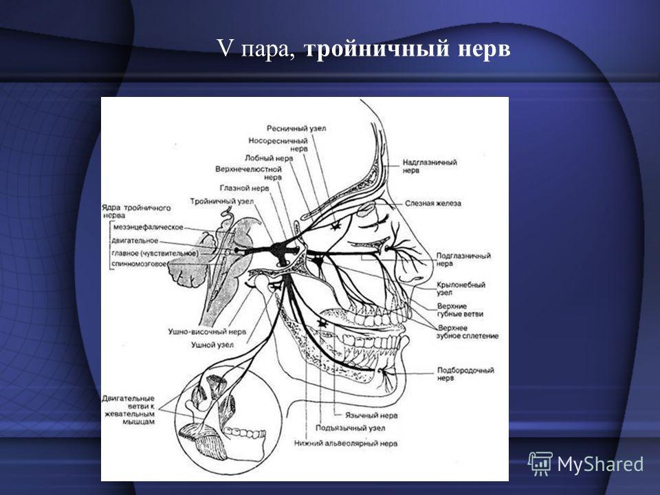 V пара, тройничный нерв