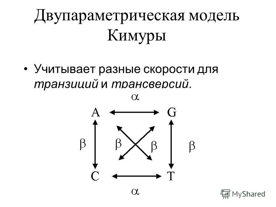 Двупараметрическая модель Кимуры Учитывает разные скорости для транзиций и трансверсий.