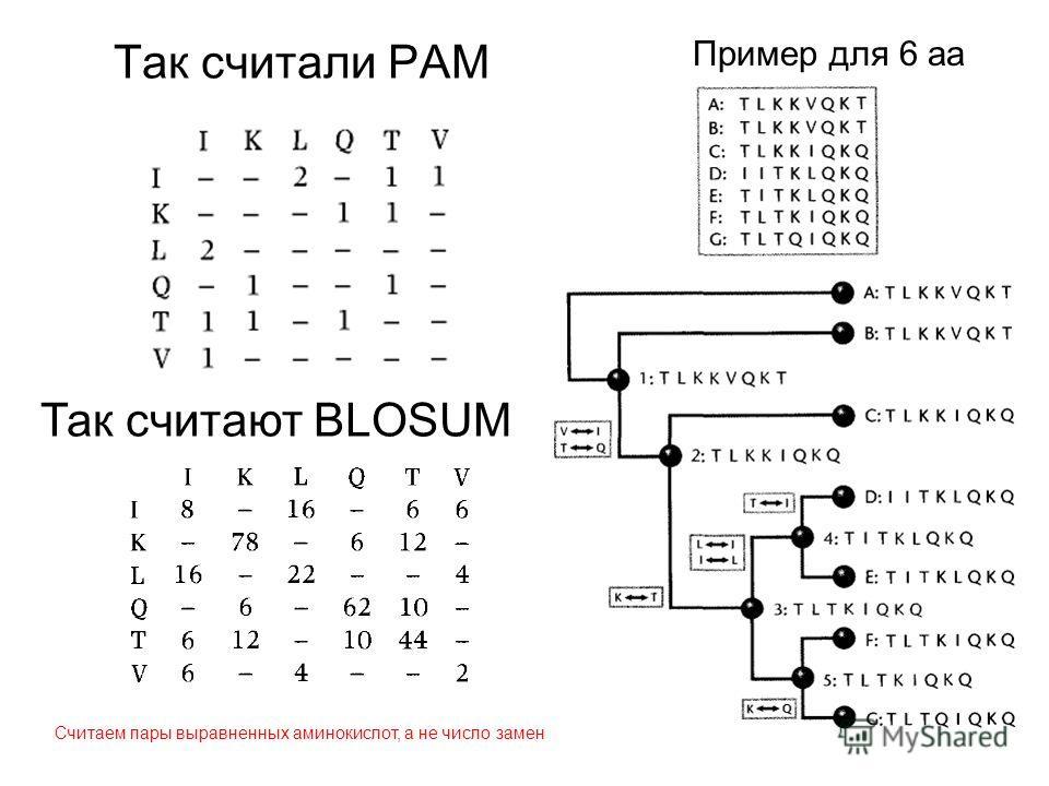 Пример для 6 аа Так считали PAM Так считают BLOSUM Считаем пары выравненных аминокислот, а не число замен
