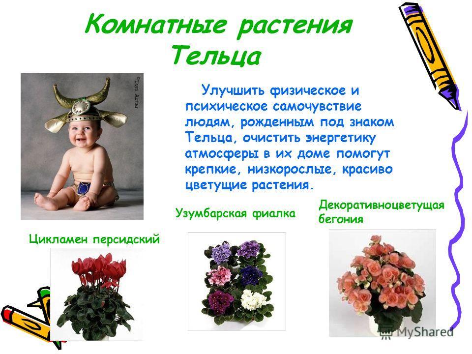 1Логин Каждому знаку Зодиака соответствует свой цветок, который служит талисманом, способствует личным успехам, достижению поставленных целей. Комнатные растения Овна (Aries) Азалия индийская, бегония королевская, герань (пеларгония), гранат, гусмани