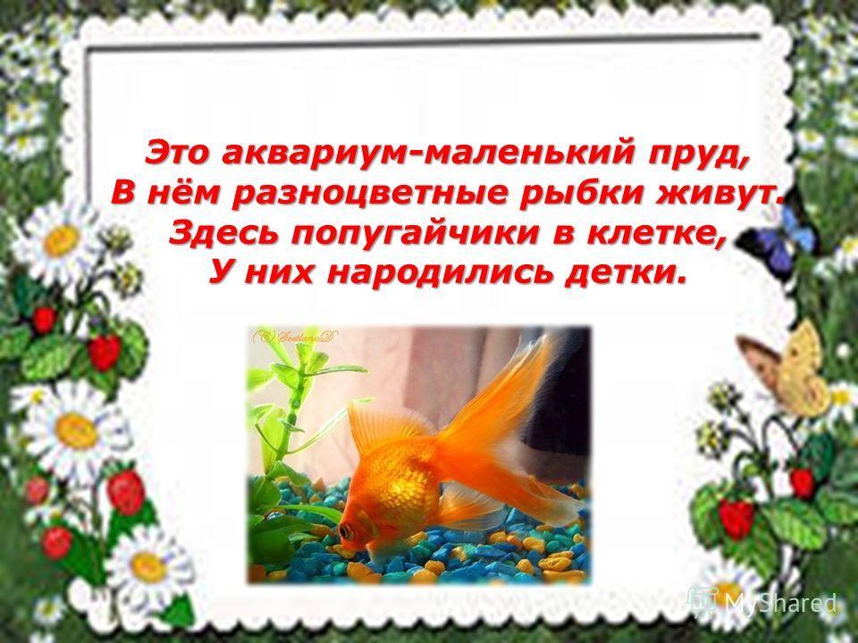 Это аквариум-маленький пруд, В нём разноцветные рыбки живут. Здесь попугайчики в клетке, У них народились детки.