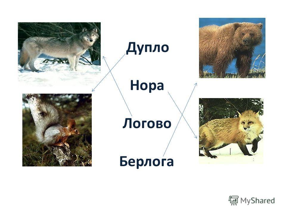 Дупло Нора Логово Берлога
