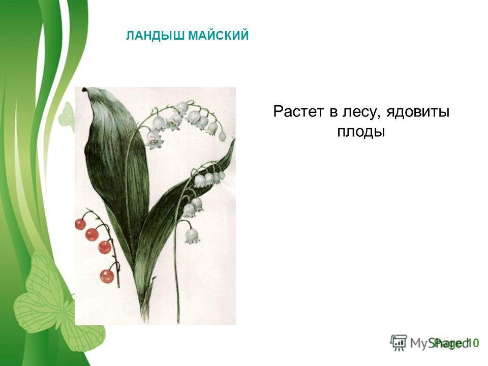 Free Powerpoint TemplatesPage 10 ЛАНДЫШ МАЙСКИЙ Растет в лесу, ядовиты плоды