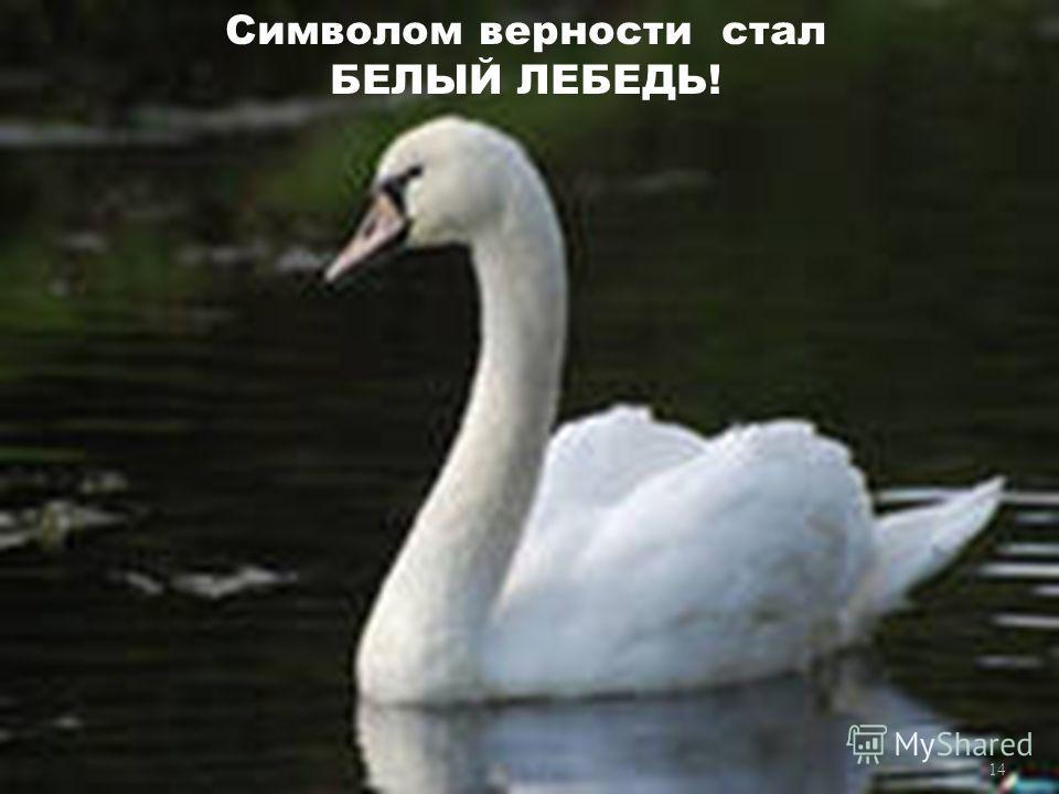 Символом верности стал БЕЛЫЙ ЛЕБЕДЬ! 14