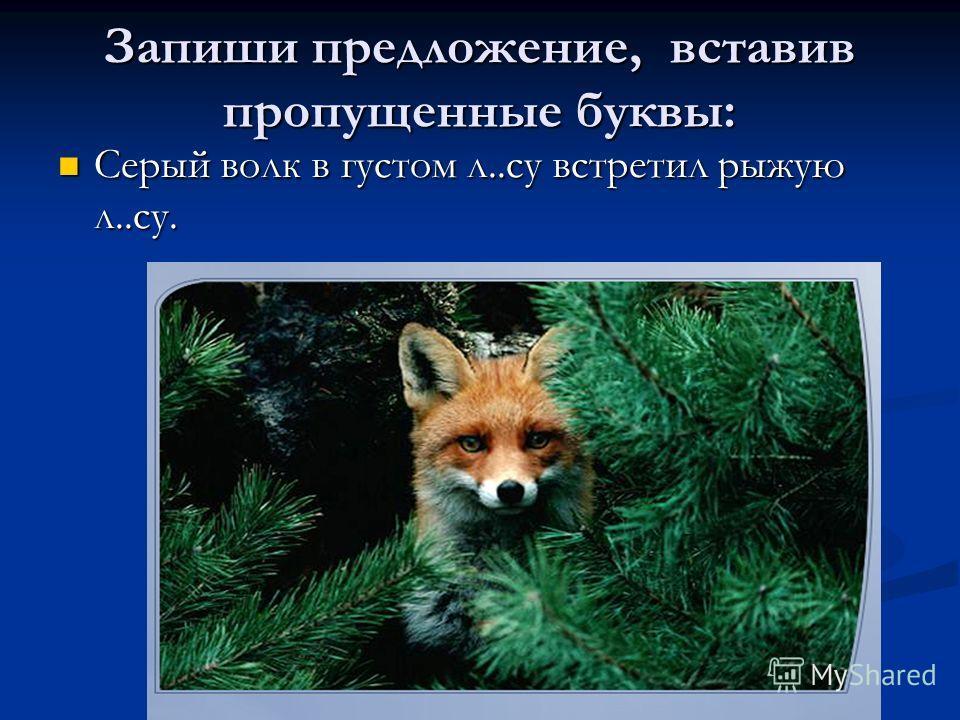 Запиши предложение, вставив пропущенные буквы: Серый волк в густом л..су встретил рыжую л..су. Серый волк в густом л..су встретил рыжую л..су.