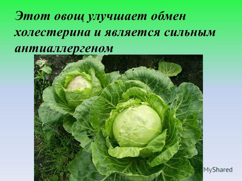 Этот овощ улучшает обмен холестерина и является сильным антиаллергеном