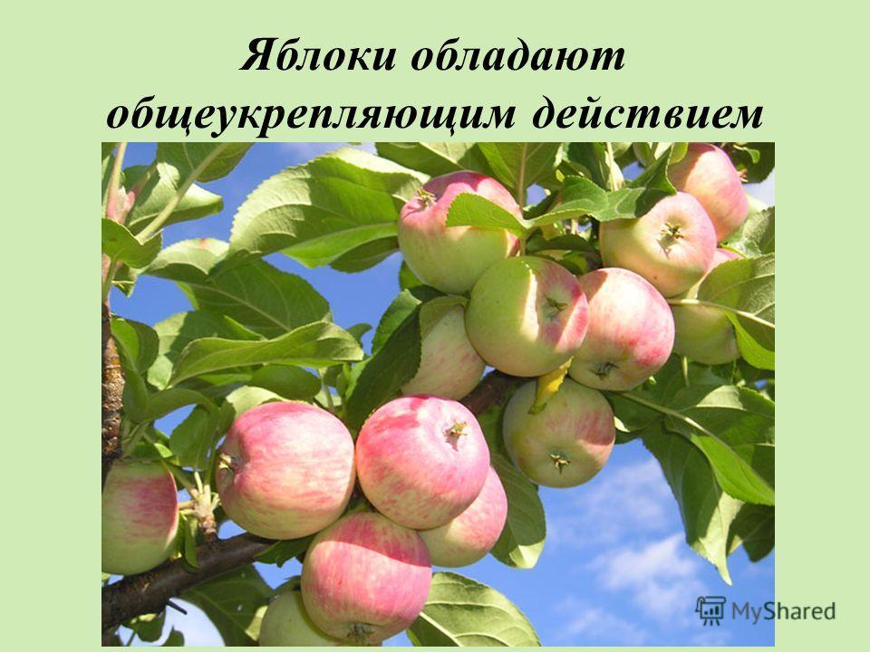 Яблоки обладают общеукрепляющим действием