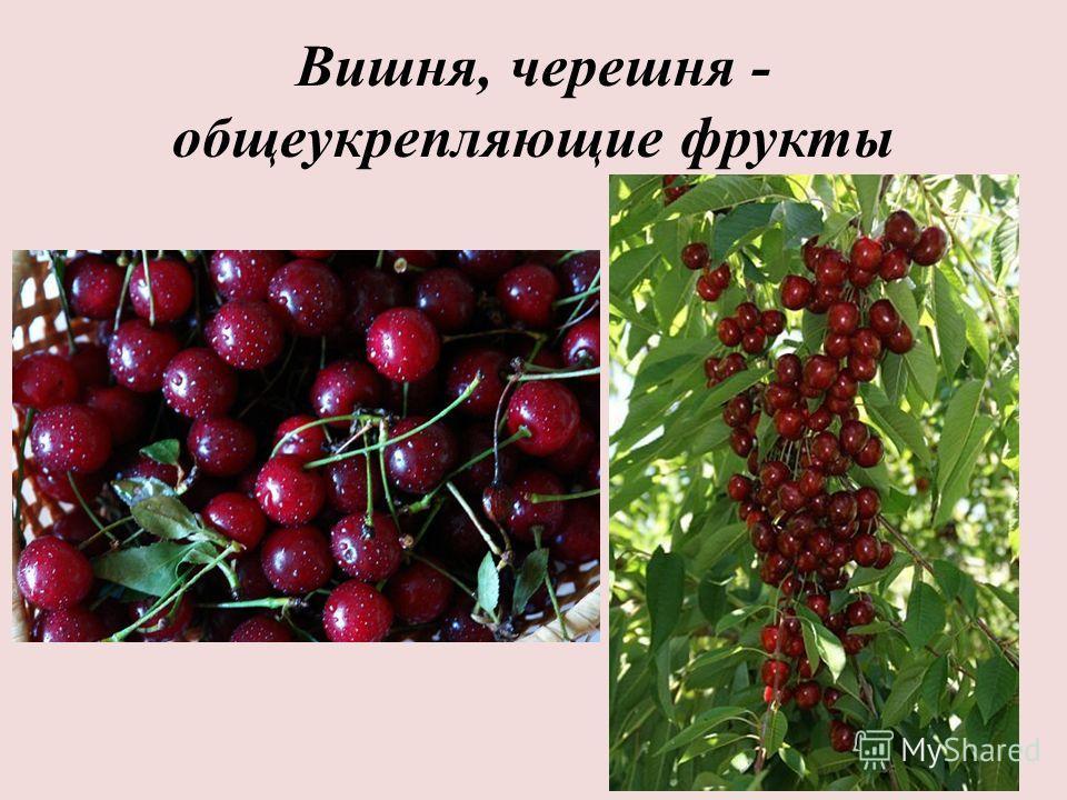 Вишня, черешня - общеукрепляющие фрукты