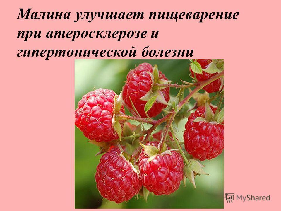 Малина улучшает пищеварение при атеросклерозе и гипертонической болезни