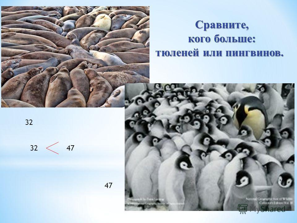 Сравните, кого больше: тюленей или пингвинов. тюленей или пингвинов. 32 47 32 47
