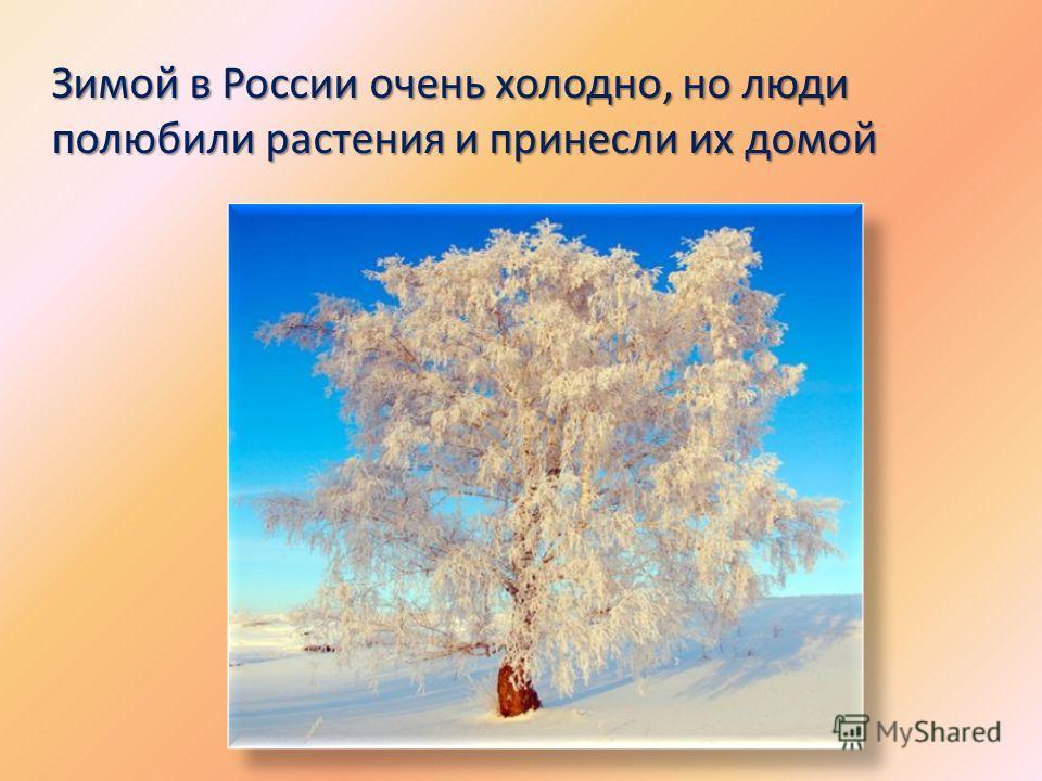 Зимой в России очень холодно, но люди полюбили растения и принесли их домой