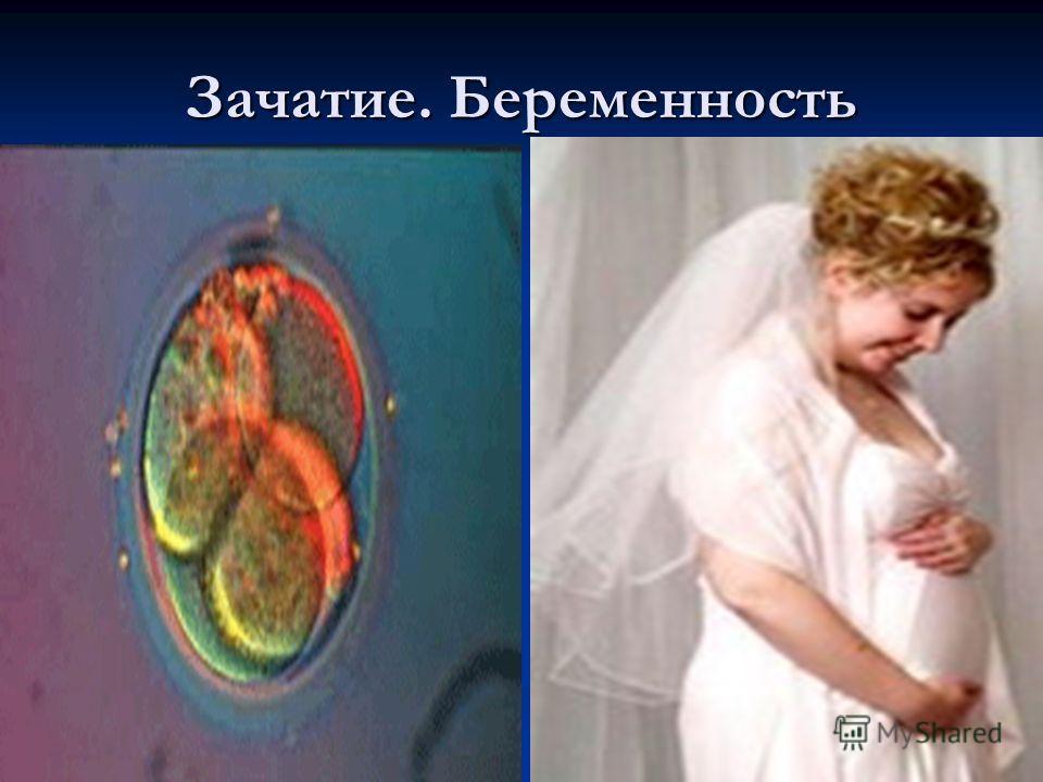 Зачатие. Беременность