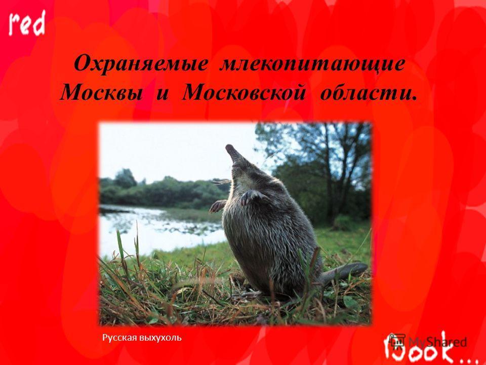 Охраняемые млекопитающие Москвы и Московской области. Русская выхухоль