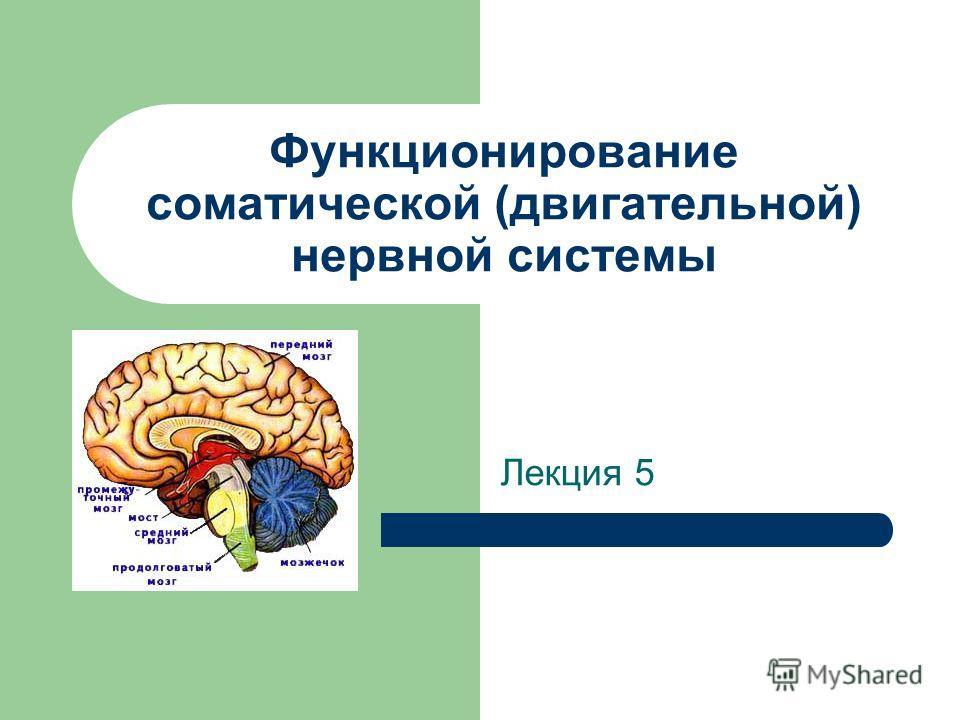 Функционирование соматической (двигательной) нервной системы Лекция 5