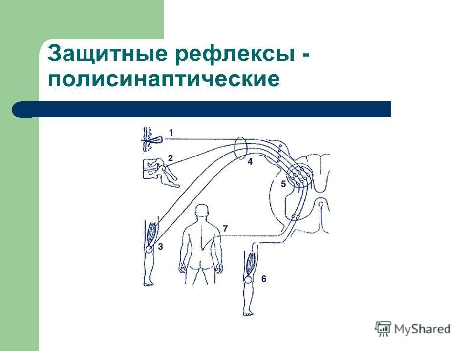 Защитные рефлексы - полисинаптические