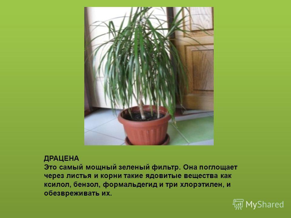 Наши друзья- комнатные растения автор презентации Серебрякова Т.М., воспитатель с.п. д/с «Сказка» г.о. Кинель