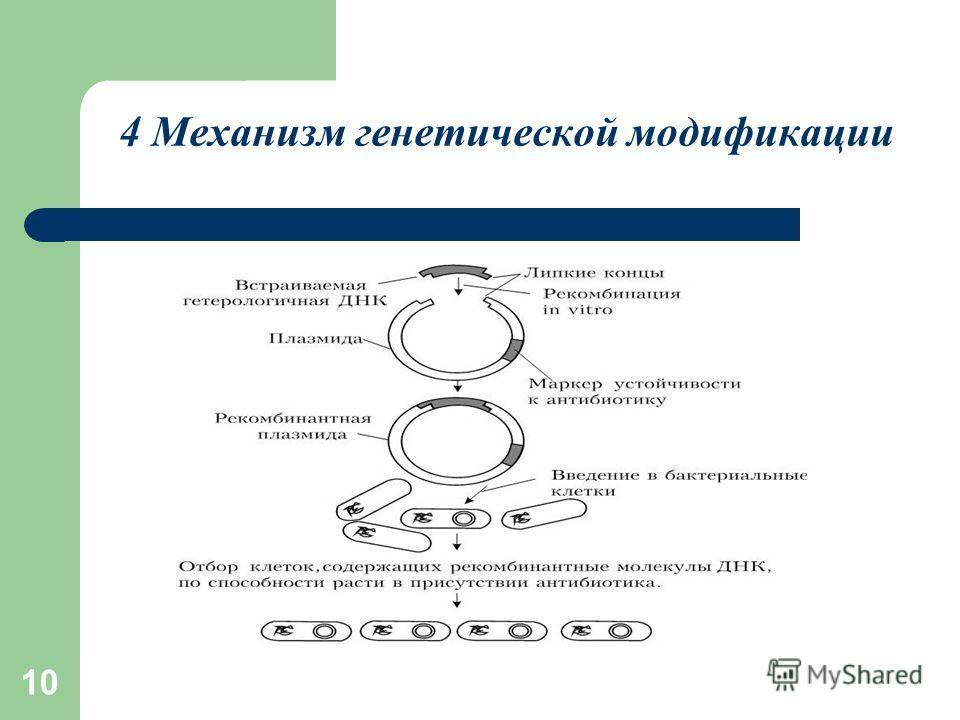 10 4 Механизм генетической модификации