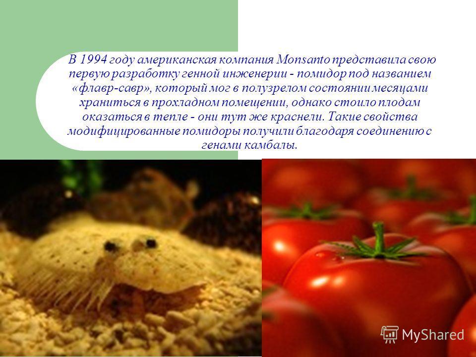 В 1994 году американская компания Monsanto представила свою первую разработку генной инженерии - помидор под названием «флавр-савр», который мог в полузрелом состоянии месяцами храниться в прохладном помещении, однако стоило плодам оказаться в тепле