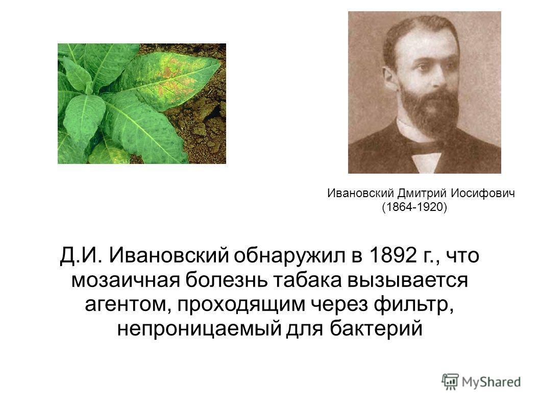 Д.И. Ивановский обнаружил в 1892 г., что мозаичная болезнь табака вызывается агентом, проходящим через фильтр, непроницаемый для бактерий Ивановский Дмитрий Иосифович (1864-1920)