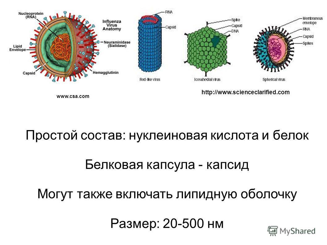 Простой состав: нуклеиновая кислота и белок Белковая капсула - капсид Могут также включать липидную оболочку Размер: 20-500 нм www.csa.com http://www.scienceclarified.com