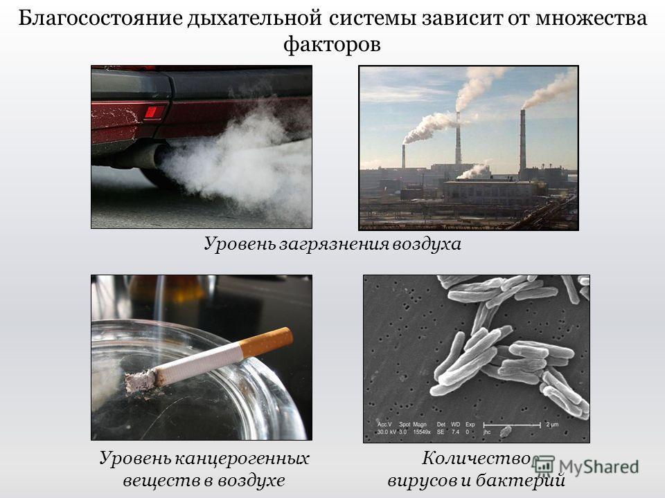 Благосостояние дыхательной системы зависит от множества факторов Уровень загрязнения воздуха Количество вирусов и бактерий Уровень канцерогенных веществ в воздухе
