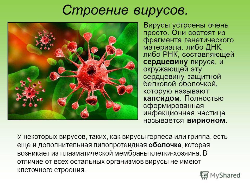 Строение вирусов. Вирусы устроены очень просто. Они состоят из фрагмента генетического материала, либо ДНК, либо РНК, составляющей сердцевину вируса, и окружающей эту сердцевину защитной белковой оболочкой, которую называют капсидом. Полностью сформи