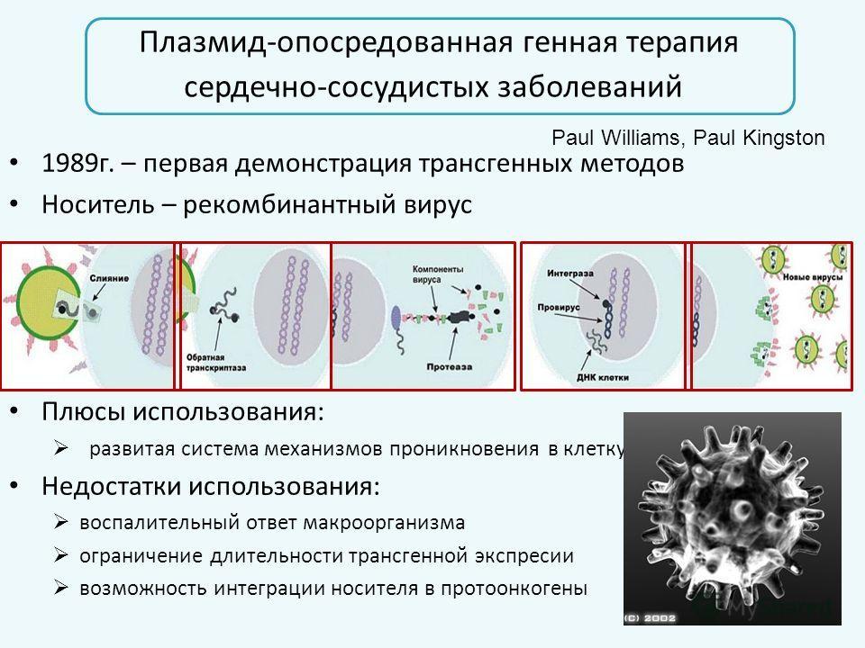 Плазмид-опосредованная генная терапия сердечно-сосудистых заболеваний 1989г. – первая демонстрация трансгенных методов Носитель – рекомбинантный вирус Плюсы использования: развитая система механизмов проникновения в клетку, ядро Недостатки использова