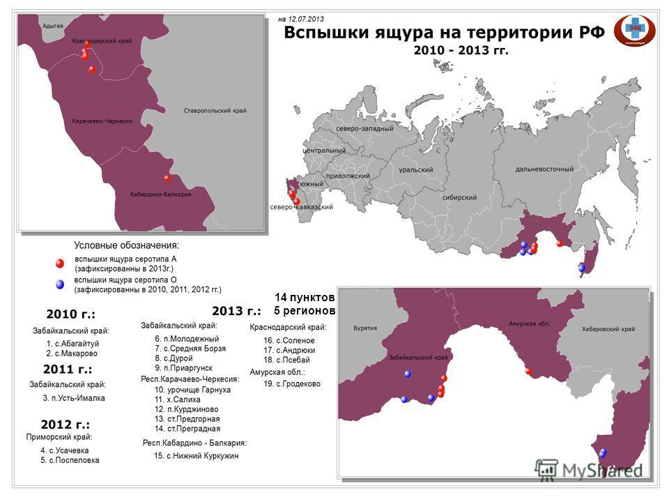 14 пунктов 5 регионов
