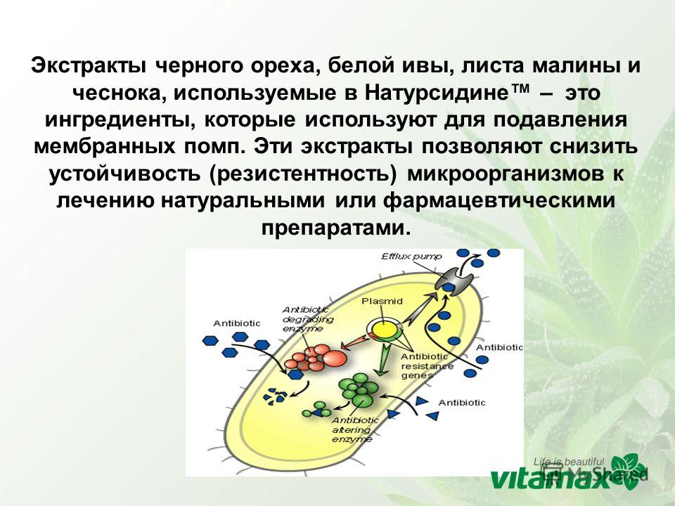 Экстракты черного ореха, белой ивы, листа малины и чеснока, используемые в Натурсидине – это ингредиенты, которые используют для подавления мембранных помп. Эти экстракты позволяют снизить устойчивость (резистентность) микроорганизмов к лечению натур