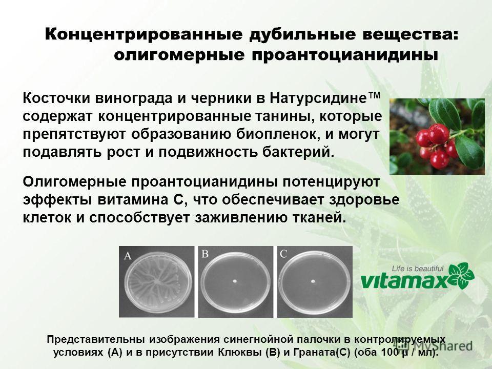 Косточки винограда и черники в Натурсидине содержат концентрированные танины, которые препятствуют образованию биопленок, и могут подавлять рост и подвижность бактерий. Олигомерные проантоцианидины потенцируют эффекты витамина C, что обеспечивает здо
