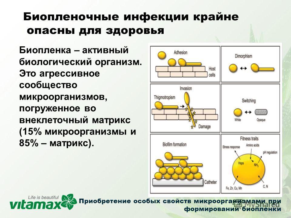 Биопленка – активный биологический организм. Это агрессивное сообщество микроорганизмов, погруженное во внеклеточный матрикс (15% микроорганизмы и 85% – матрикс). Биопленочные инфекции крайне опасны для здоровья Приобретение особых свойств микроорган
