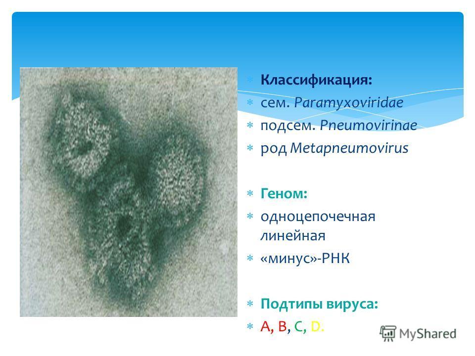 Классификация: сем. Paramyxoviridae подсем. Pneumovirinae род Metapneumovirus Геном: одноцепочечная линейная «минус»-РНК Подтипы вируса: А, В, С, D.