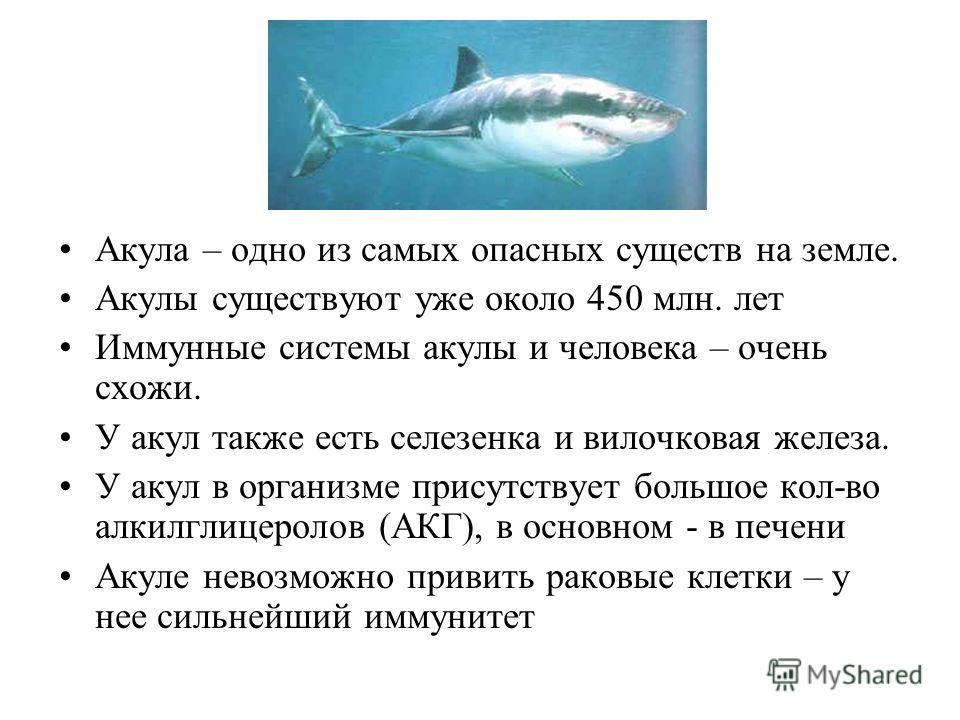 . Акула – одно из самых опасных существ на земле. Акулы существуют уже около 450 млн. лет Иммунные системы акулы и человека – очень схожи. У акул также есть селезенка и вилочковая железа. У акул в организме присутствует большое кол-во алкилглицеролов