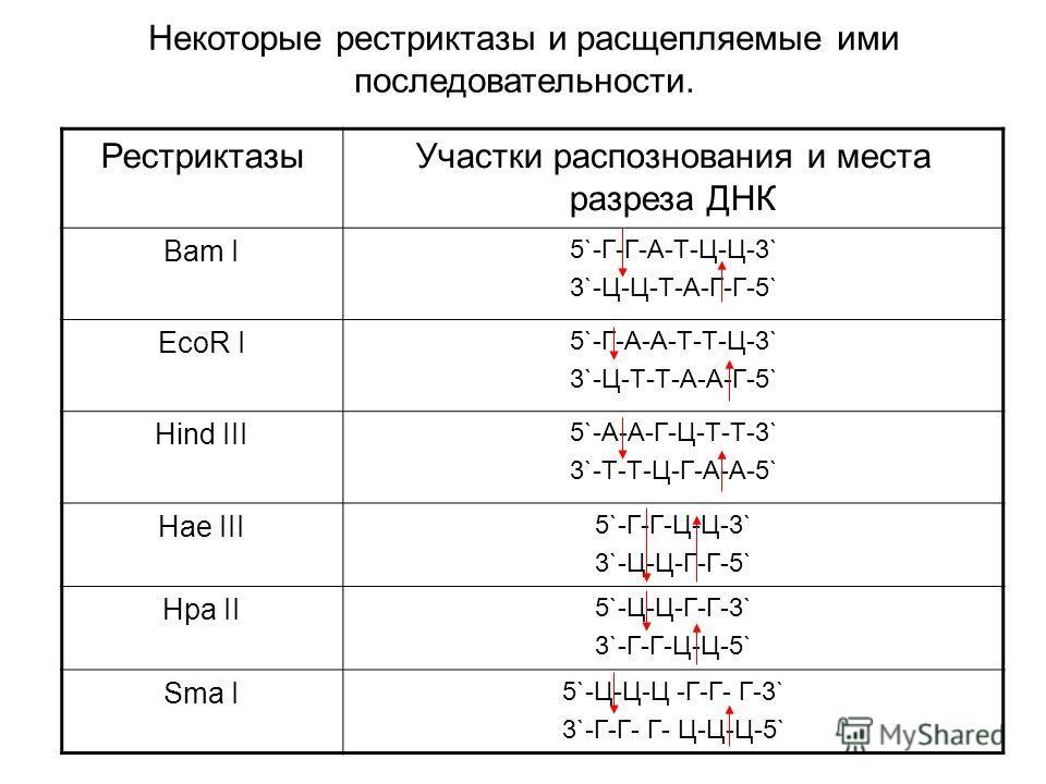 Некоторые рестриктазы и расщепляемые ими последовательности. РестриктазыУчастки распознования и места разреза ДНК Bam I 5`-Г-Г-А-Т-Ц-Ц-3` 3`-Ц-Ц-Т-А-Г-Г-5` EcoR I 5`-Г-А-А-Т-Т-Ц-3` 3`-Ц-Т-Т-А-А-Г-5` Hind III 5`-А-А-Г-Ц-Т-Т-3` 3`-Т-Т-Ц-Г-А-А-5` Hae II