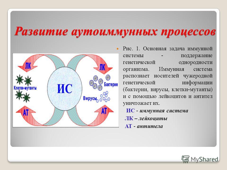 Развитие аутоиммунных процессов Рис. 1. Основная задача иммунной системы - поддержание генетической однородности организма. Иммунная система распознает носителей чужеродной генетической информации (бактерии, вирусы, клетки-мутанты) и с помощью лейкоц