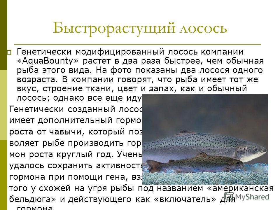 Быстрорастущий лосось Генетически модифицированный лосось компании «AquaBounty» растет в два раза быстрее, чем обычная рыба этого вида. На фото показаны два лосося одного возраста. В компании говорят, что рыба имеет тот же вкус, строение ткани, цвет