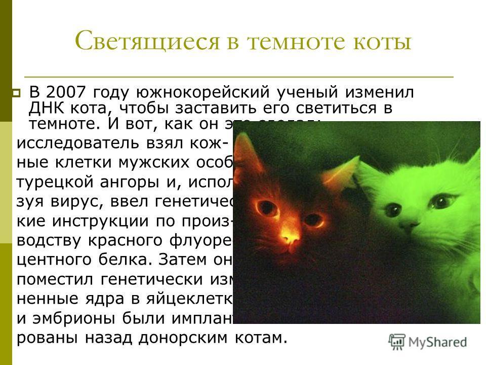 Светящиеся в темноте коты В 2007 году южнокорейский ученый изменил ДНК кота, чтобы заставить его светиться в темноте. И вот, как он это сделал: исследователь взял кож- ные клетки мужских особей турецкой ангоры и, исполь- зуя вирус, ввел генетичес- ки