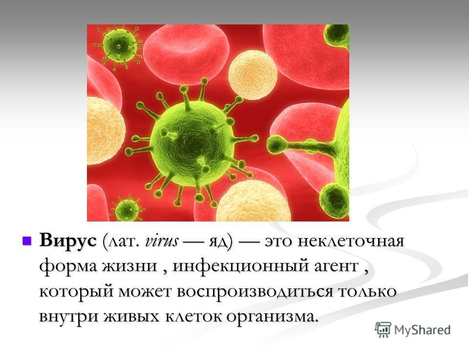 Вирус (лат. virus яд) это неклеточная форма жизни, инфекционный агент, который может воспроизводиться только внутри живых клеток организма. Вирус (лат. virus яд) это неклеточная форма жизни, инфекционный агент, который может воспроизводиться только в
