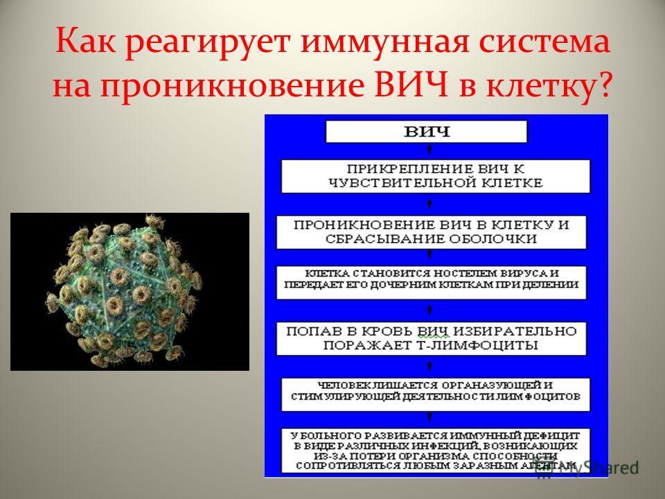 Как реагирует иммунная система на проникновение ВИЧ в клетку?